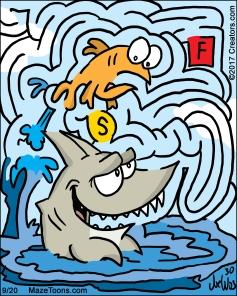 sharkdaily2