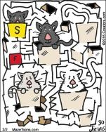 kittensinboxes
